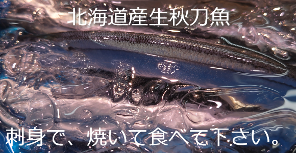 生秋刀魚入荷してますよ!