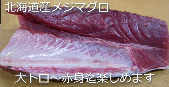 北海道産メジマグロ 大トロ~赤身迄味わえます